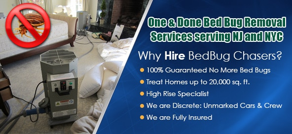 Bed Bug heat treatment, Bed Bug images, Bed Bug exterminator, New York Bed Bug Exterminator