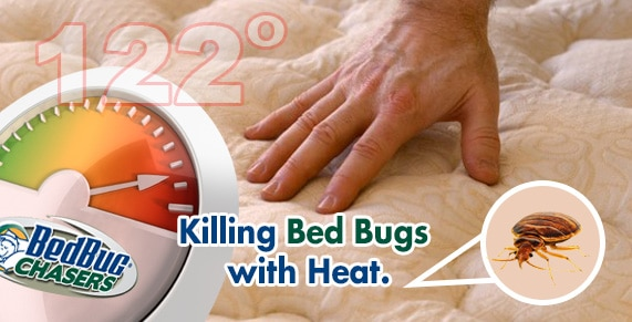 Brooklyn Bed Bug Heat, Bed Bug Heat Treatment Brooklyn, Bed Bug Treatment Brooklyn, Get Rid of Bed Bugs Brooklyn, Bed Bug Inspection Brooklyn
