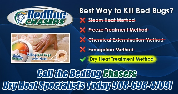 Bed Bug pictures, Bed Bug treatment, Bed Bug heat