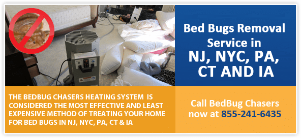 Get Rid of Bed Bugs Brooklyn, Bed Bug Spray Brooklyn, What to do Bed Bugs look like Brooklyn, Bed Bug Treatment Brooklyn,