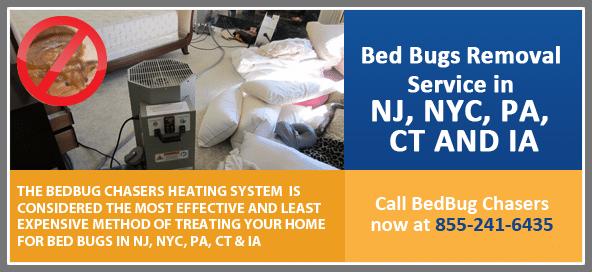 Get Rid of Bed Bugs Brooklyn, Bed Bug Spray Brooklyn, What to do Bed Bugs look like Brooklyn, Bed Bug Treatment Brooklyn,