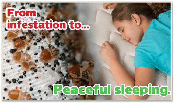 Kill Bed Bugs Brooklyn, Chemical Free Bed Bug Treatment Brooklyn, Bed Bug Treatment Brooklyn, Chemical Free Bed Bug Treatment NYC, Bed Bug Treatment NYC, Bed Bug Exterminator Brooklyn, Bed Bug Exterminator NYC,